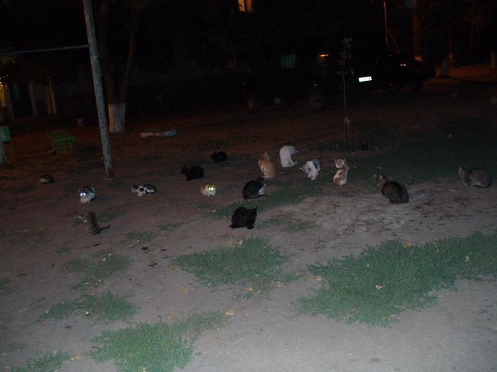 Покровительственный окрас и нашествие. Кот, Фотография, Окрас, Люди и кошки, Длиннопост