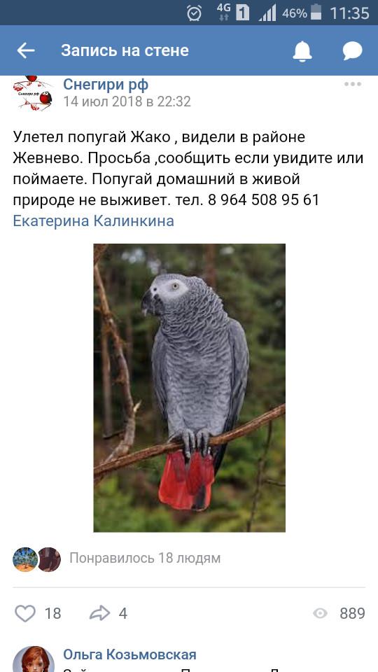 Попугай Жако улетел и отказываются возвращать Жако, Истра, Попугай