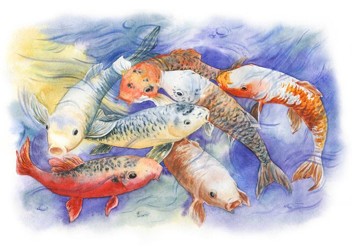 Японские карпы кои Моё, Акварель, Живопись, Карпы кои, Рыба, Рисунок, Творчество, Карп