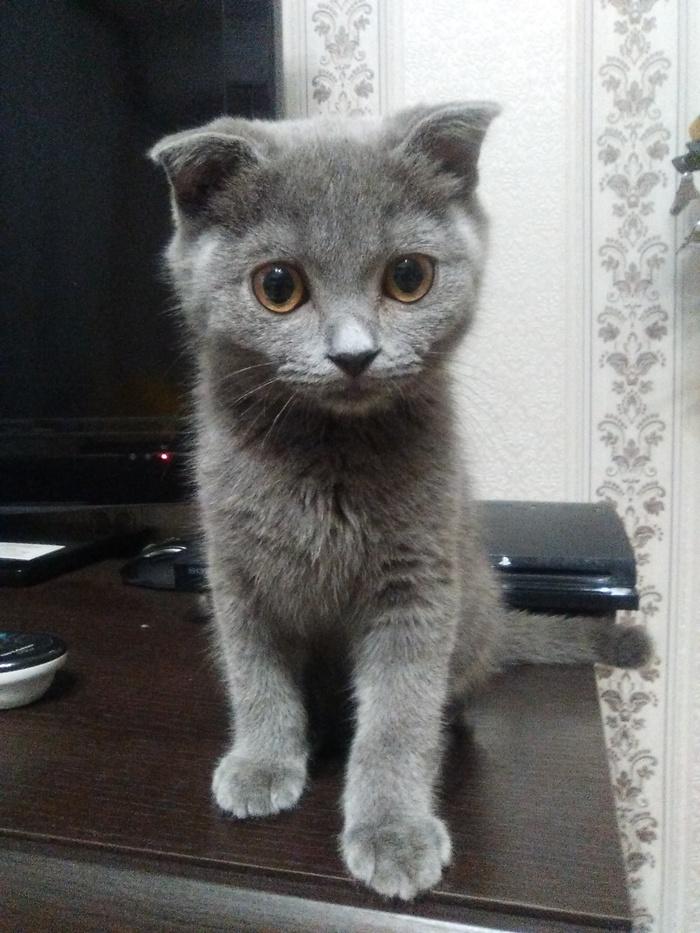 Решились на второго...кота) Кот, Фотография, Длиннопост
