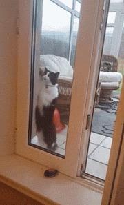 Впустите!