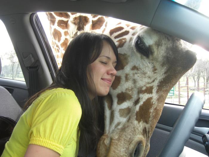 Девушка любит жирафов.