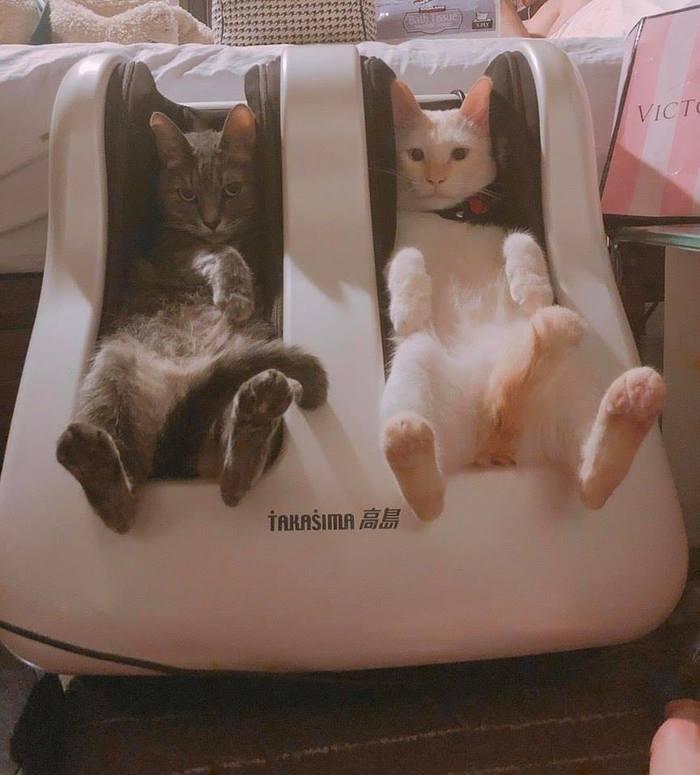 Массажер для ног и ..котов