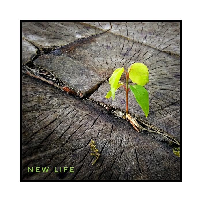 Новая жизнь. Жизнь, Росток, Пень