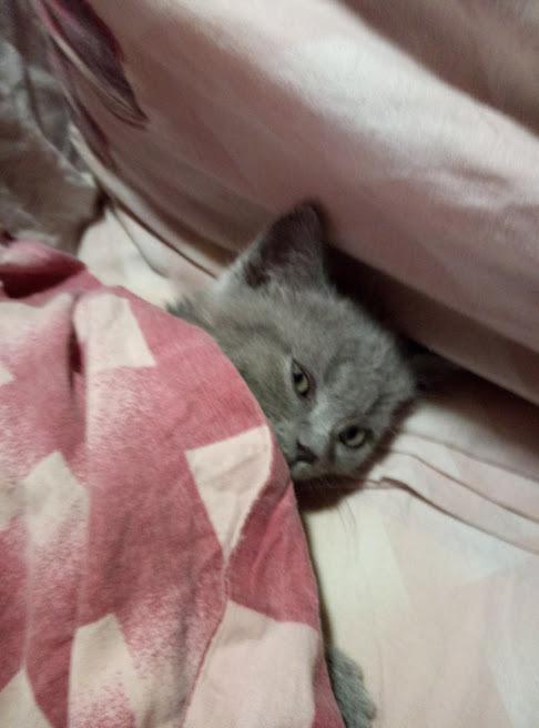 Когда ты маленький котик и тебе никуда не нужно вставать утром