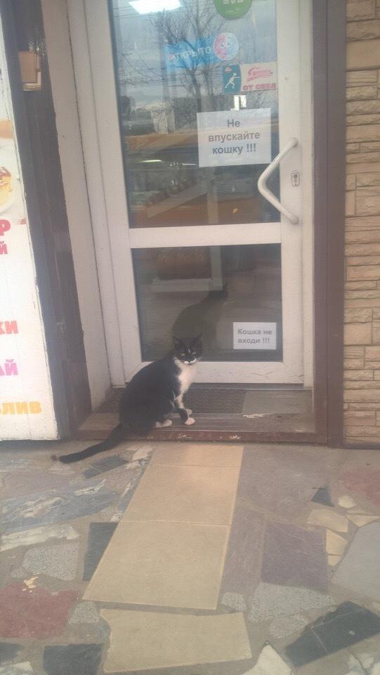 Кошка, не входи!!!