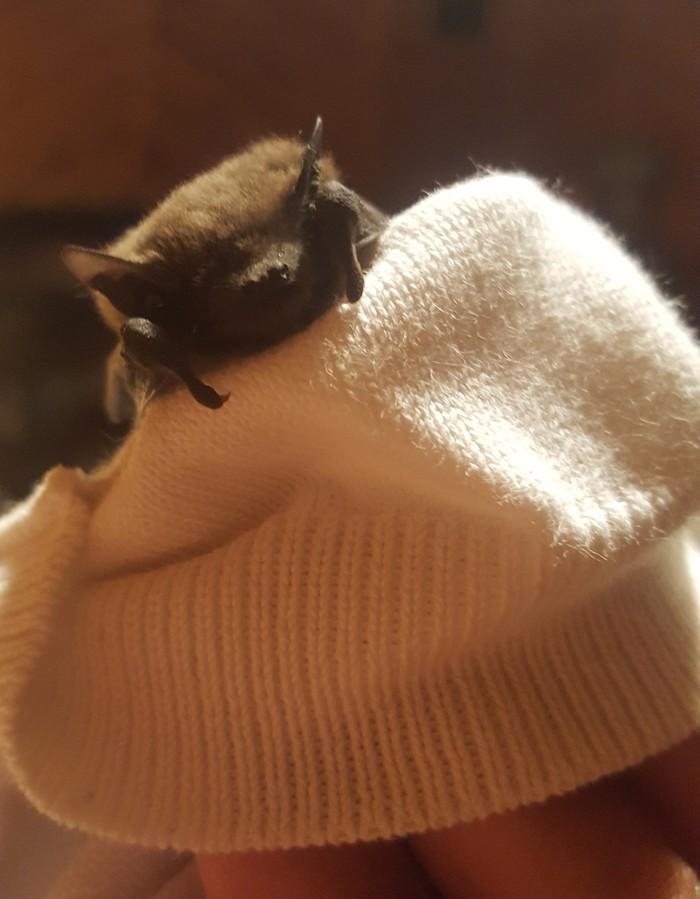 Ночные развлечения Летучая мышь, Прелесть, Кошки-Мышки, Однажды ночью, Длиннопост