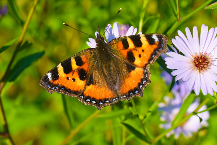 Бабочки. №3 Фотография, Макросъемка, Бабочка, Длиннопост