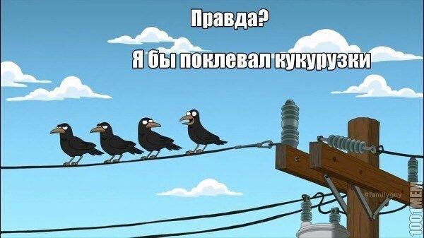 В каждой компании есть «Роджер» Гриффины, Картинка с текстом, Раскадровка, ВКонтакте, Длиннопост
