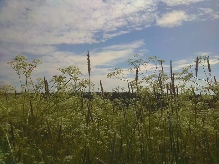 Лето Природа, Закат, Облака, Красота природы, Лето, Вологодская область, Мобильная фотография, Длиннопост