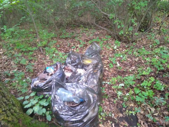 Чищу лес от мусора. Чистомен, Субботник, Уборка, Рейд, Длиннопост