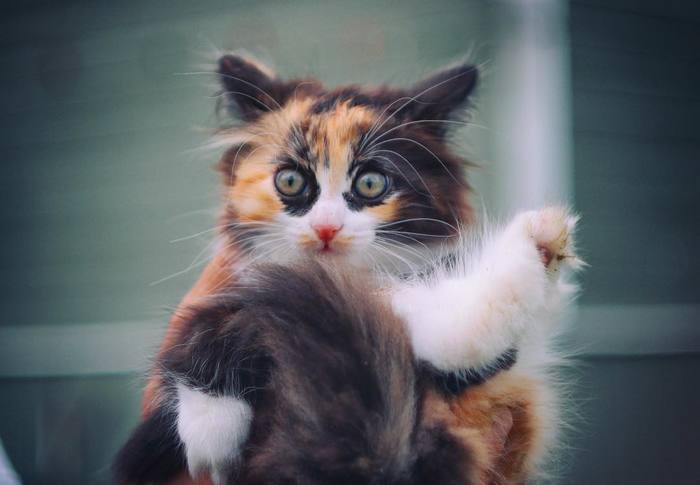 Котик-упоротик Фотография, Кот, Упоротый