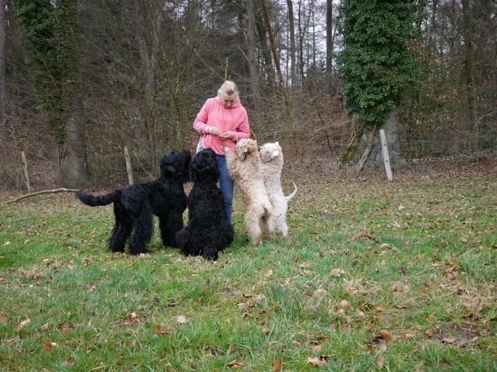 Наш собачатник Собака, Щенки, Питомник, Длиннопост, Русский черный терьер, Пшеничный терьер