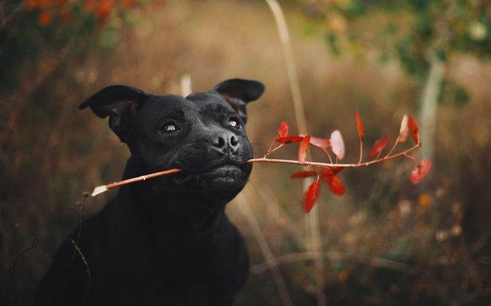 Начало карьеры хорошего пёсика! Собака, Щенки, Животные, Умный, Милота