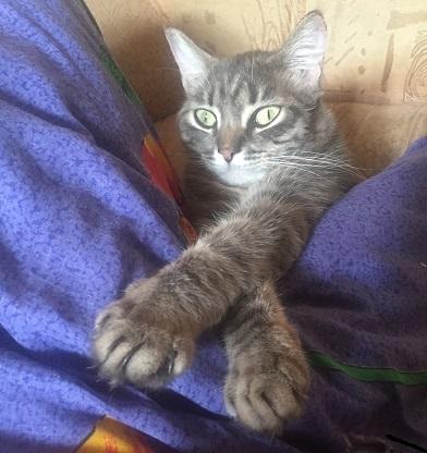 """""""Это моя подушка!"""" Кот, Котомафия, Моё"""