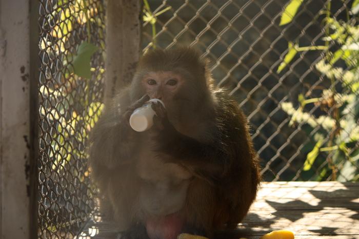 Про Миху Челябинский зоопарк, Животные, Приматы, Длиннопост, Природа, Фотография