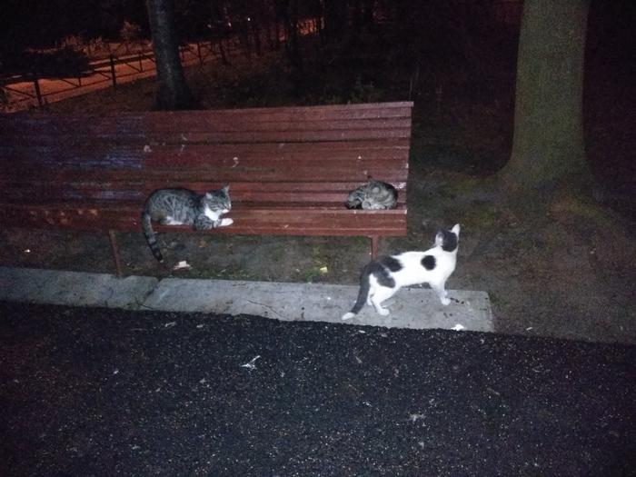 А в Питере на скамейках - коты :)