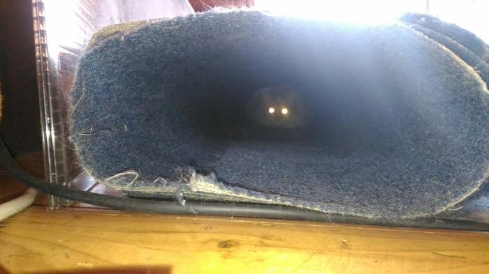 Свет в конце тоннеля не всегда паровоз на встречу Кот, Шпион, Работа