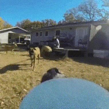 Не поймаешь!