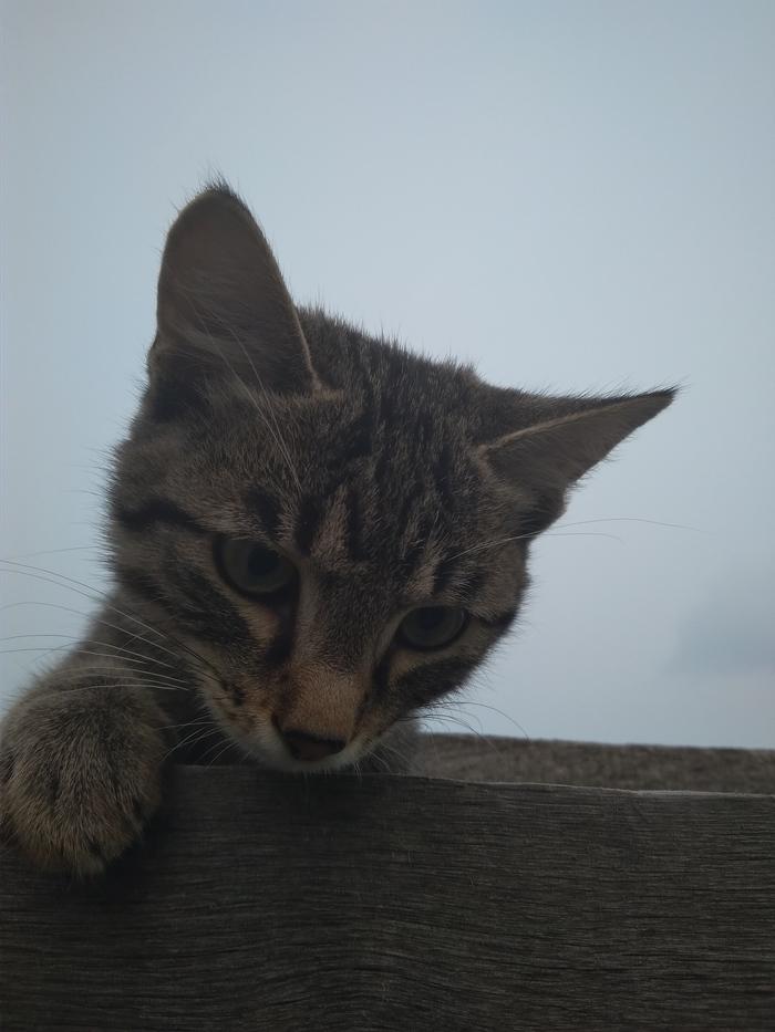 Дачный гость) Кот, Сюрприз, Незванные гости, Длиннопост