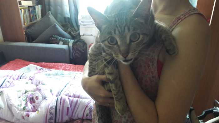 Найден котик! Потеряшка, Екатеринбург, Найден кот, Ботаника, Ищу хозяина, Кот