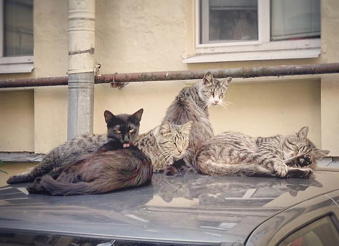 Эти коты выглядят так , будто они записали лучший рэп-альбом в истории.