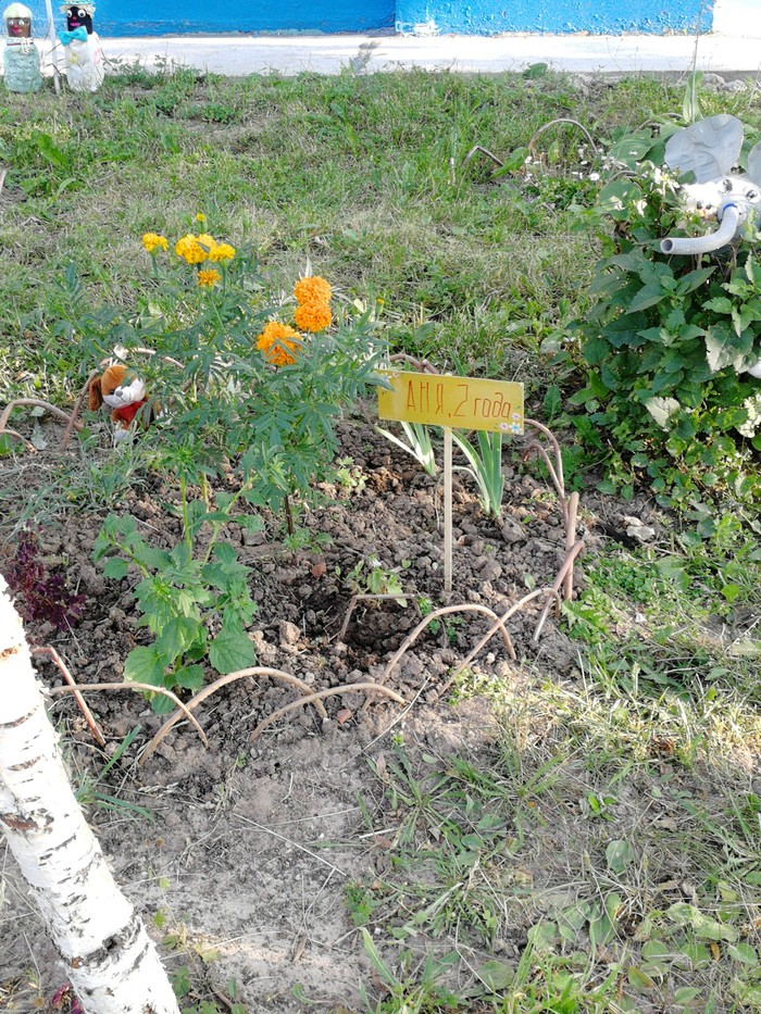 Оформление клумбы перед домом. То ли дети цветы сажали, то ли... Клумба, Дети, Двор, Длиннопост