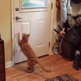 Мам, мои друзья здесь! Пойду поиграю на улице.