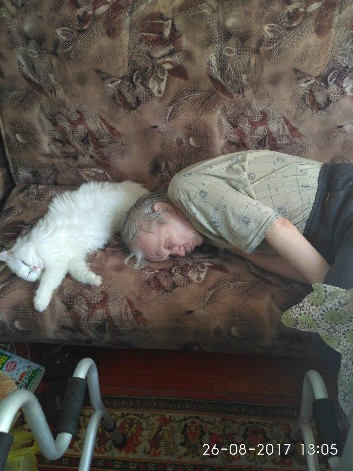 Это любовь Кот, Любимый дедушка, Шерстяной