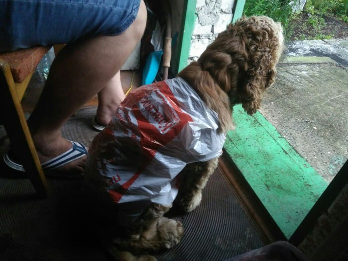 Дождь, дача, собака Кокер-Спаниель, Дождь, Дача, Собака, Наряд, Бабушка, Длиннопост