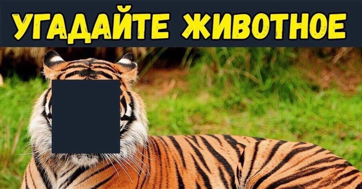 несколько угадай животное по картинке мем потому, что каждой
