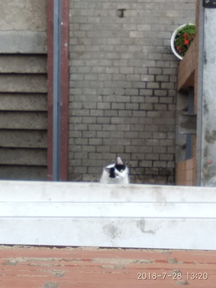Тот момент когда плюнул коту на затылок Кот, Моё, Длиннопост