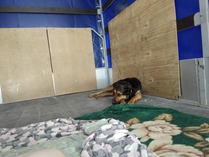 И палатки не надо) Собака, Отдых, Закат