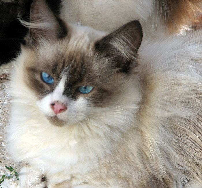 Минута котиков Кот, Спасибо что живой, Домашние животные, Спасение животных