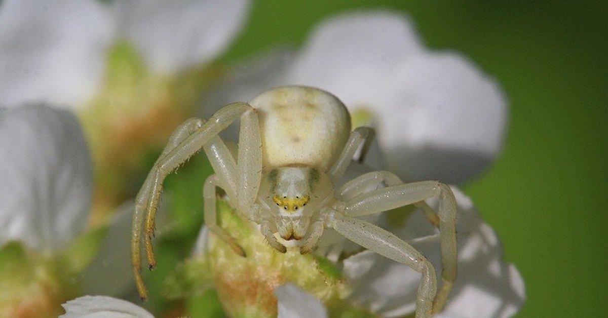 цветочный паук картинка удобства посетителей