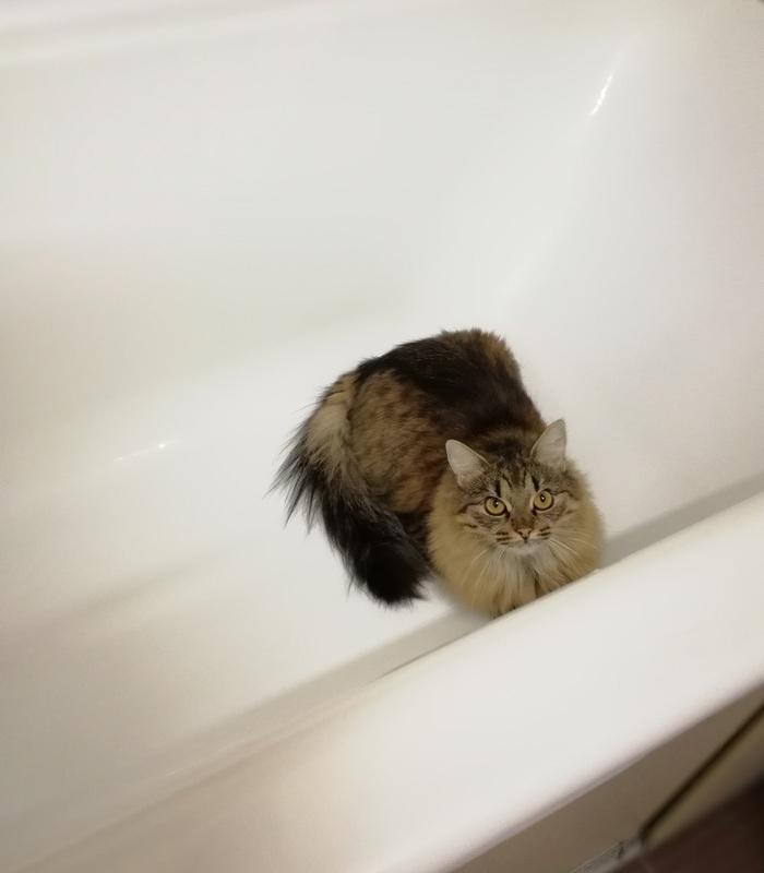 Закрой ванную, жару пускаешь Жара, Кот