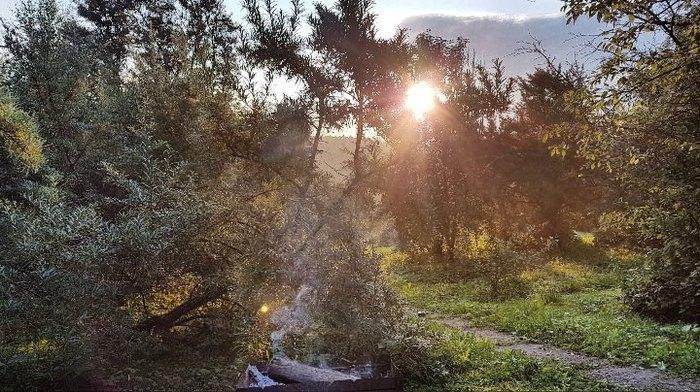 Утреннее фото облепихи выглядит как джунгли Показалось, Джунгли, Фотография, Облепиха, Рассвет