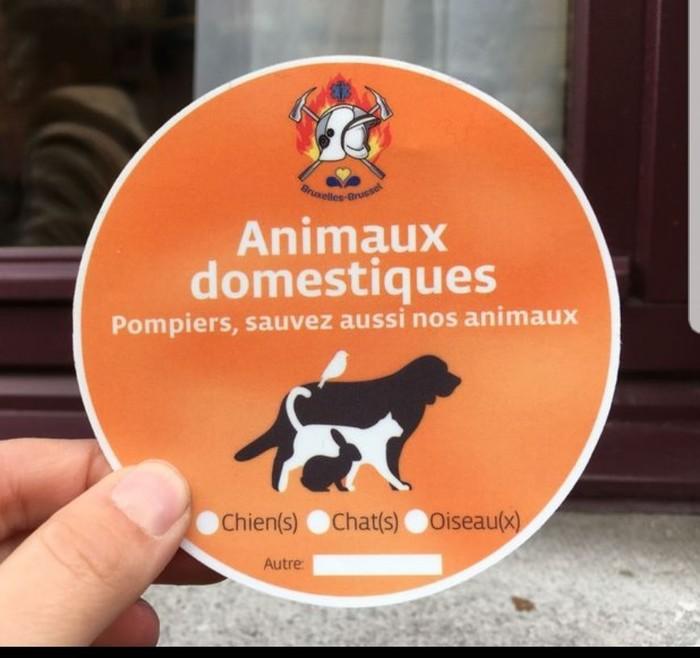 При пожаре спасите животных Бельгия, Домашние животные