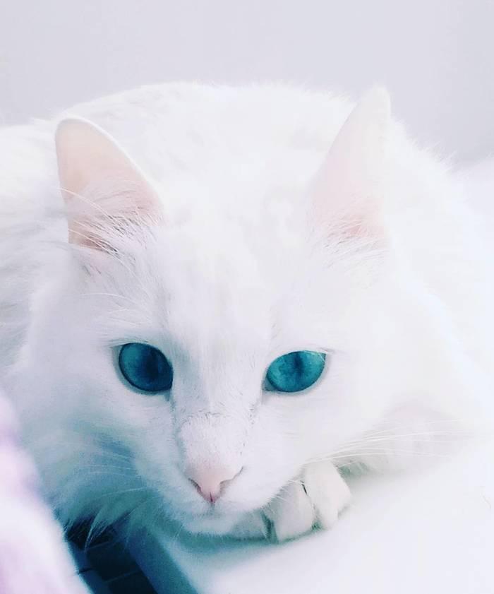 Голубые глазки.