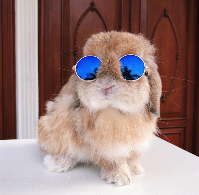 Кролик Лепса Милота, Круто, Животные, Кролик, Очки, Лето, Мода, Reddit