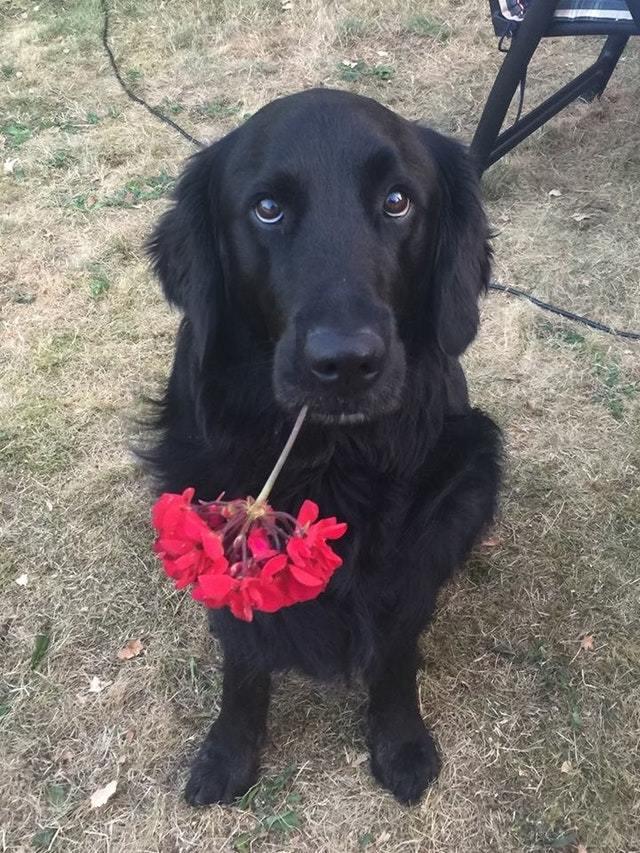 Он пришел с цветком, чтобы выразить свою любовь