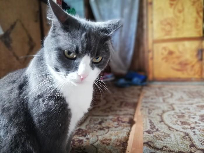 Сама серьёзность Кот, Серьезность, Жрать