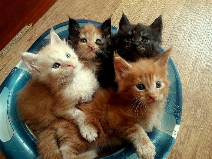 Сегодня в мире отмечают день кошек Кот, Милота, Фотография