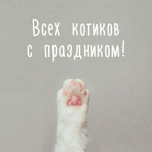 ПоздравМяу!) Кот, Котомафия, День кошек, Поздравление