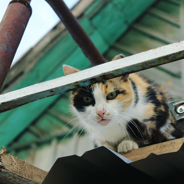 Кошка, которая смотрит на тебя, как на... Кот, Трехцветная кошка, Я вас не звал