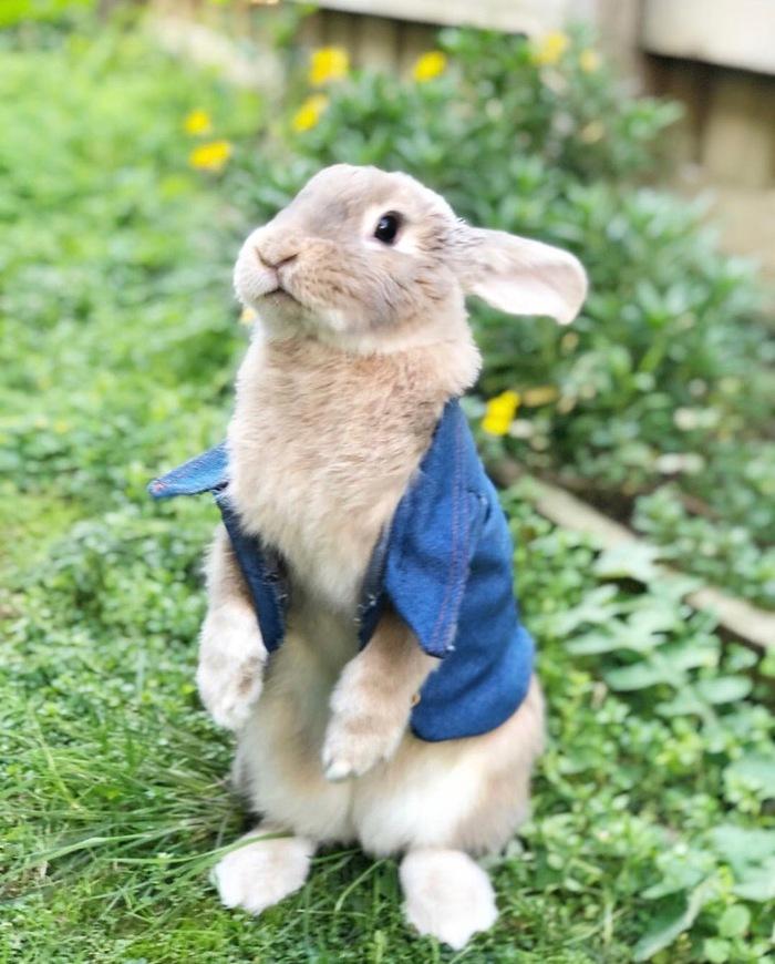Кролик Питер в реальности