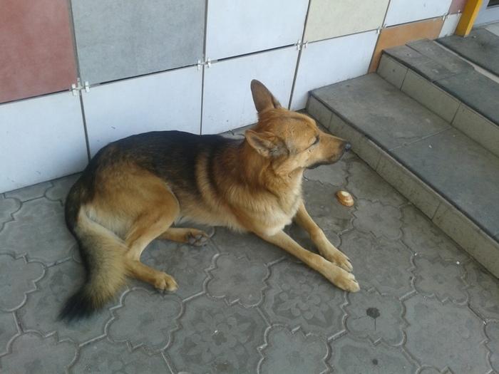 Потерялась собака Потеря, Собака, Поиск, Пермь