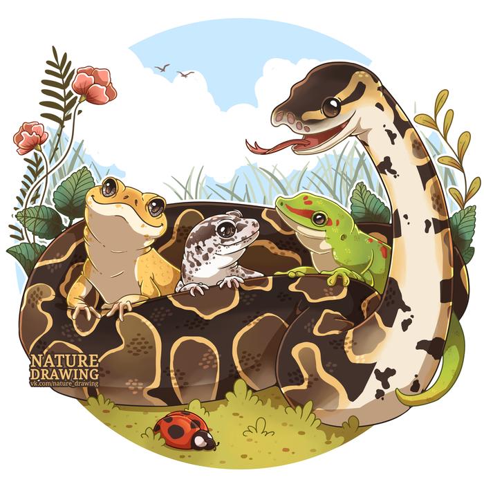 Милые рептилии Рисунок, Анималистика, Террариумистика, Королевский питон, Эублефар, Ящерица, Цифровой рисунок