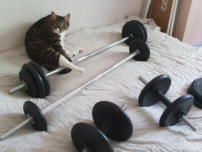 Тяжёлый атлет