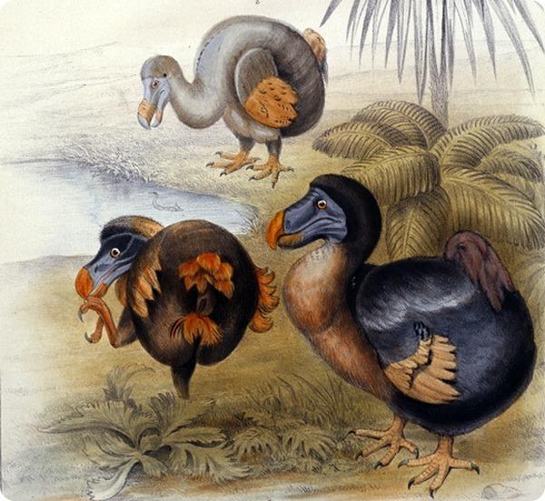 Птица додо. Маврикий, Птица додо, Зоология, История, Природа, Длиннопост